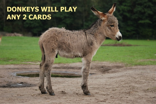 Poker donkeys will play any 2 cards